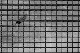 Under the steel grid