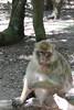 2013-07-21 14-41-46 Montagne des singes.jpg (beckendorf.marc) Tags: fra france alsacechampagneardennelorraine kintzheim alsacechampagneardennelorrain