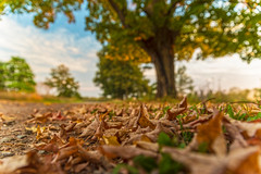 (Daniel000000) Tags: leaves fall autumn colors trees tree park sunnyvale wausau clouds sky sunlight sunshine fun light green bright wisconsin midwest nikon d750
