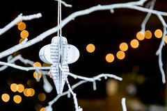 005_Suffolk Christmas stock 2016_HIGH-RES_ShowCapture.com_--« Paul Coghlin (Visit Suffolk UK) Tags: bipp britain british christmas2016 easternengland england english jpegs paulcoghlin showcapture suffolk uk visitsuffolkcommission agriculture capture christmastreefarming events forestry professional show wwwshowcapturecom ©pauljcoghlin
