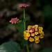 Bloemen  in Explore!! (Geziena) Tags: bloem flower bloeien palmentuin elche omdem1 1240mm closeup explore