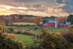 Sunset On The Farm (romiana70) Tags: dairy farm cornwall connecticut new england fall autumn foliage cows sunset rural barn red pasture