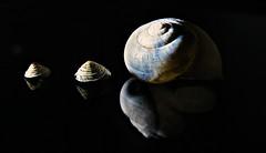 Hermafroditas (Marina Is) Tags: macromondays hmm sidelit photography snoot sidelight luzlateral naturaleza fauna macrofotografia cosmicsnails cosmic light luz hermafroditas hermaphrodites snails caracoles
