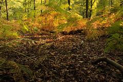 National Park Veluwezoom (H. Bos) Tags: onzaligebossen veluwe veluwezoom natuur nature bossen woods nationalpark nationaalpark gelderland autumn herfst