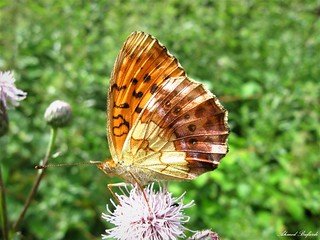 Butterfly 1454