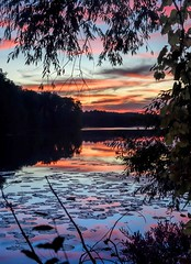 Sunset At Heron Lake (Wes Iversen) Tags: clichesaturday hcs heronlake holly hollystaterecreationarea michigan nikkor24120mm branches lakes lilypads silhouettes sunsets trees water smileonsaturday treesinthepicture