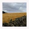 Aubrac (Yvan LEMEUR) Tags: aubrac lozère aveyron extérieur landscape muretdepierressèches muret ciel paysage