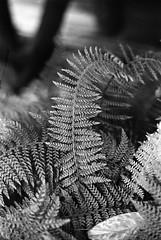 IMG_20170815_0005 (Filmphotographic98) Tags: film photography medium format shootfilm forestry trees woodland ferns tunnel bristol somerset