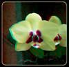 Longwood Gardens Flowers 9 - Anaglyph 3D (DarkOnus) Tags: pennsylvania bucks county panasonic lumix dmcfz35 3d stereogram stereography stereo darkonus longwood gardens flowers scenic scenery flower botanical garden orchid orchids anaglyph