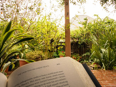 week #42: reading on a rainy day (Connie Sue2) Tags: 52in2017 themefavoritethings week42 garden backyard reading neilgaiman theviewfromthecheapseats