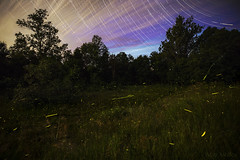 Firefly Frenzy (Matt Molloy) Tags: mattmolloy timelapse photography timestack photostack movement motion fireflies night sky stars trails lines clouds light field grass trees violet ontario canada landscape nature countryside lovelife