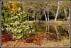 Paysage d'automne (Les photos de LN) Tags: automne paysage couleurs teintes nuances lumière végétation refletseau rivière parc majolanblanquefort