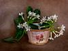 Un bodegón (roqberd) Tags: bodegón caja cesta flor flores