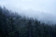 Gossamer Breeze (chris.ph) Tags: mist fog forest green gossamer sky mood squamish britishcolumbia layers canon6d lyrics
