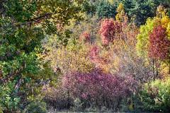 Senza parole... (Gianni Armano) Tags: senza parole colori autunno foto gianni armano photo flickr