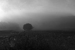 """first light"" (B.Graulus) Tags: photography landscape morning monochrome herent veltem flanders belgium vlaamsbrabant vlaanderen belgië landschap nature canon"