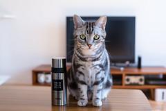 _DSC0271 (catfish.boogie) Tags: nikond750 nikkor50mmf18g japan hokkaido cat
