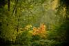 nog even vlammen (Don Pedro de Carrion de los Condes !) Tags: donpedro d700 nijkerk herfst herfstig bladeren gekleurd schoon bos detail bomen takken mysterieus herbst