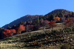 Autumn in Vallecamonica (annalisabianchetti) Tags: mountains montagne vallecamonica alps italy paesaggio landscape trees alberi colors light autumn autunno