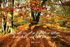 The Gold Of Autumn (Glenda Hall) Tags: parkanaurforestpark parkanaur goldenbrownleaves forest autumn leaves canon80d 10mm wideanglelens canon autumnphotography nature october2017 october glendahall bible bibletext bibleverse comeuntomeallyethatlabour matthew gimp christian god trees tree
