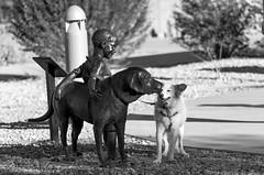 10/12 Nadja (utski7) Tags: 12monthsfordogs nadja statue arizona fall2017