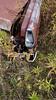 20171021_124902 v2 (collations) Tags: ontario mcleansautowreckers autowreckers wreckers automobiles autos abandoned rockwood derelict junkyards autograveyards carcemeteries