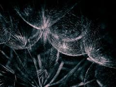 Spooky structures (Karsten Gieselmann) Tags: 60mmf28 em5markii mzuiko macromondays makro microfourthirds olympus schwarz weis black kgiesel m43 mft white halloween