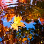 Leaf and Reflections in Fountain 4868 B thumbnail
