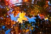 Leaf and Reflections in Fountain 4868 B (jim.choate59) Tags: silvertonoregon oregon autumn fallseason reflection singleleaf pond fountain water jchoate d610 ripple