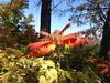 Minnehaha Park 171022_036 (jimcnb) Tags: 2017 oktober minnehaha minneapolis minnesota