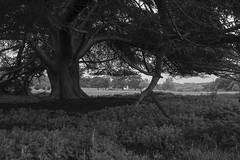 A welcome shelter (Anxious Silence) Tags: thechilterns crowsleypark chilternhills blackandwhite landscape nature tree countryside rural