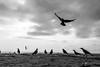 @Chennai (Raja. S) Tags: chennai marinabeach birds