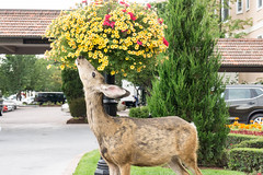 20170831-153206 (fritzmb) Tags: colorado coloradosprings event keyword northamerica place source sourcefritzmb usa animal building deer descriptor flower hotel mammal nature plant public structure vacation