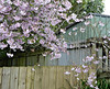 Corner (sallyNZ) Tags: scavenger7 corner blossom spring