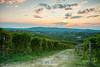 Un tramonto bellissimo... Langhe (Albi Nikon) Tags: tramonto colori viti vitigni langhe piamonte magnifici italy italia bellezze relax poesia vino nuvole sole sera