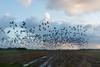 Ganzen (Omroep Zeeland) Tags: ganzen kerkwerve
