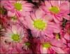 (Cliff Michaels) Tags: iphone6 photoshop pse9 kroger flowers