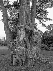 20171015-IMGP0847 (rob mulf) Tags: nymans tree blackwhite pentax westsussex greatbritian england outdoors nature