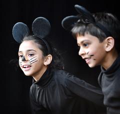 Auckland Diwali Festival (Peter Jennings 27 Million+ views) Tags: auckland diwali festival india peter jennings nz new zealand
