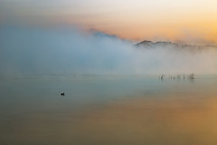 Foggy Duck (matthewkaz) Tags: limelake lake water fog weather reflections duck bird sunrise cedar maplecity leelanau michigan puremichigan summer 2017 weeds