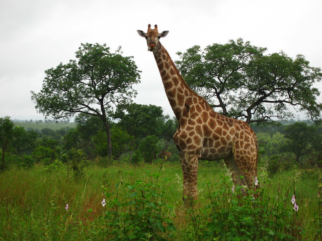 South Africa - 058