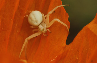 White on Orange - Explored