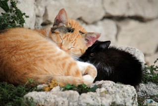 Cozy afternoon (The Odd Couple) (4)