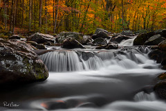 Autumn Flow (Reid Northrup) Tags: water cascade rock rocks tree trees forest smokys autumn fall creek river stream tennessee greatsmokymountainnationalpark tremont nature landscape fineartphotography reidnorthrup nikon rrs