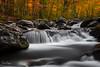 Autumn Flow (Reid Northrup) Tags: water cascade rock rocks tree trees forest smokys autumn fall creek river stream tennessee greatsmokymountainnationalpark tremont nature landscape fineartphotography reidnorthrup nikon rrs