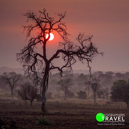 Wild Africa!