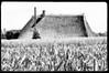 _DSC7746 Felder und Reetdachhaus, Bauernhaus im Hamburger Stadtteil Spadenland an der Elbe. (christoph_bellin) Tags: felder reetdachhaus bauernhaus elbe hamburgs bezirke stadtteile bilder hamburg spadenland vierlande stadtteil fotografie sehenswüridigkeiten