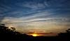 B E A U T I F U L . S U N S E T (mblaeck) Tags: sunset dusk sky clouds blue orange trees nature evening skyline maddensfalls australianlandscape landscape australianscenery scenery australia sun sunsetting lastlight