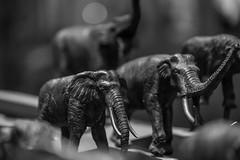 20170922_F0001: Migrating elephant models (wfxue) Tags: smithsonian nationalmuseumofnaturalhistory museum animal model african elephant biology science blackandwhite bw bnw monochrome