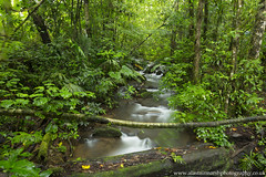 Cloud Forest (Alastair Marsh Photography) Tags: costarica clouds cloudforest forest rainforest rain rainfall water river stream jungle tropical trees tree leaves leaf plants plant green centralamerica latinamerica